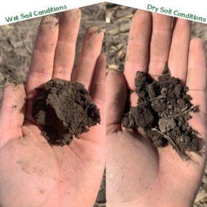 Wet vs Dry soil